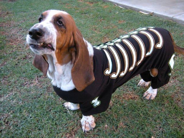 basset hound halloween