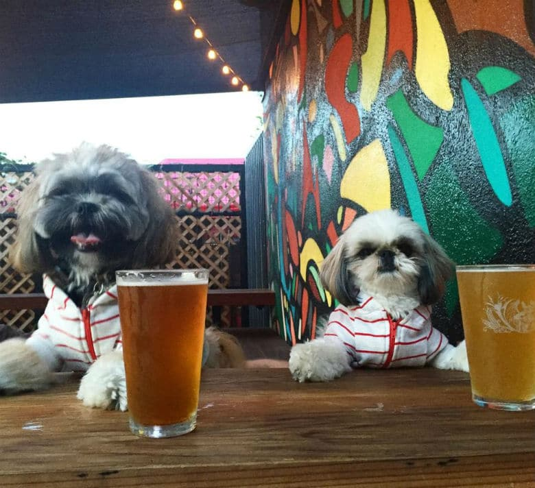 One Los Angeles Craft Beer Bar Merges Good Drinks With Pet-Friendly Awesomeness