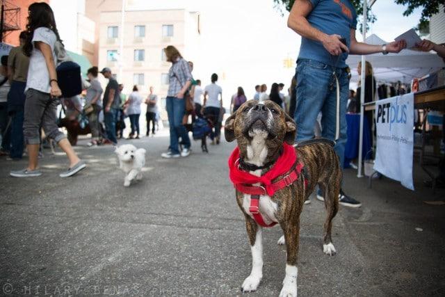 Fall fest Badass Brooklyn Animal Rescue