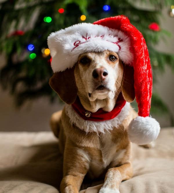 From Poinsettias to Christmas Lights, Here's How to Keep Your Dog Safe This Holiday Season
