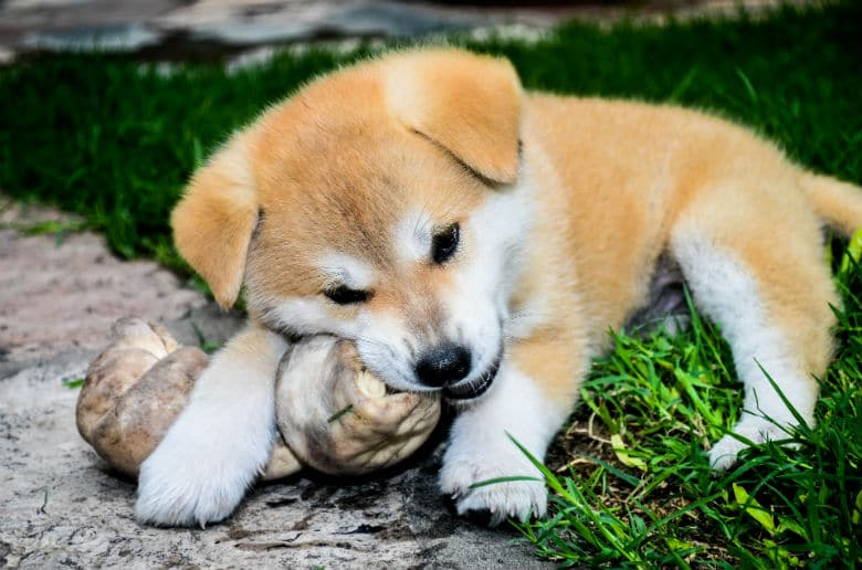 Could This Be the Most Dangerous Dog Toy?