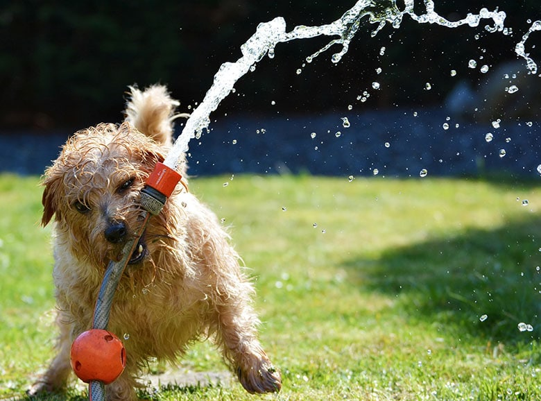 Everything You Need to Know to Have a Happy and Safe Summer for You and Your Dog