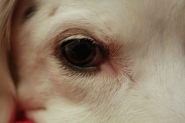 5 Troublesome Dog Statistics And What We Can Do to Change the Story