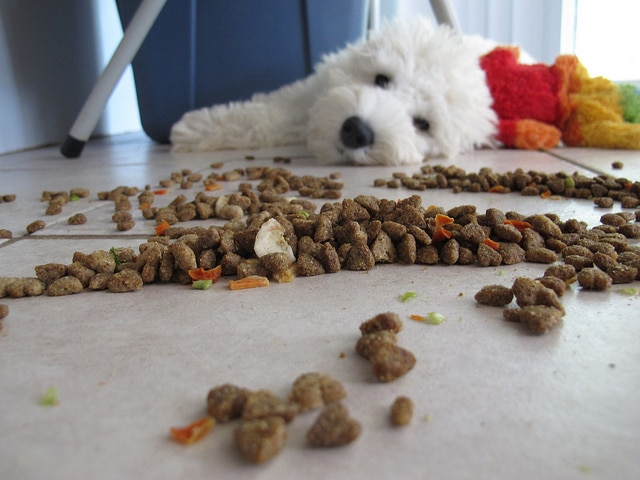 Don't Be Fooled: Here is What Dog Food Should Contain