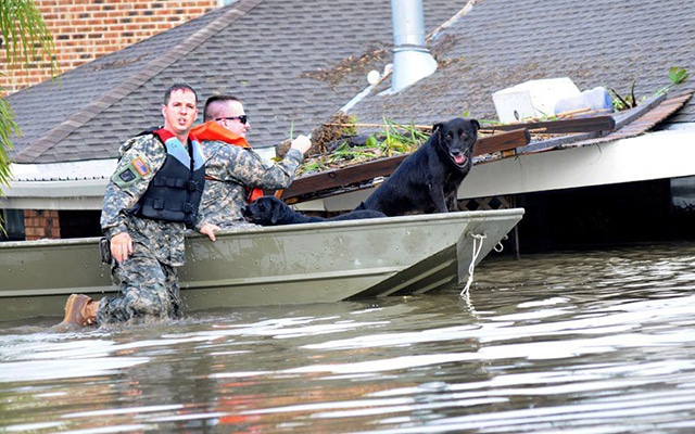 A Guide for Dog Owners on How to Prepare for a Natural Disaster