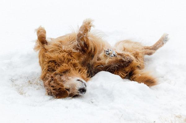 Dog enjoying the snow
