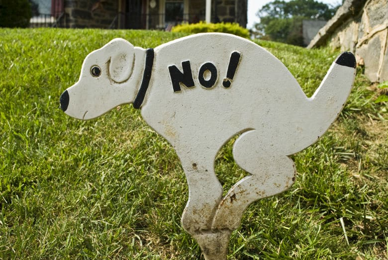 The Scientific Reasons Behind Why Your Dog Eats His Poop