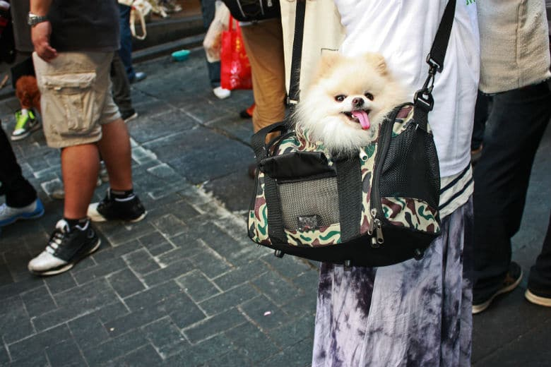 Wags and Walks to Hold Sample Sale and Wine Hour to Raise Money for Dogs