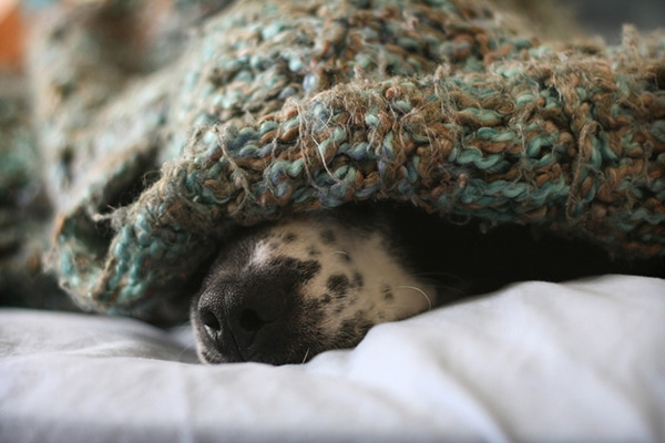 The Bogeyman Syndrome: How to Overcome the 5 Most Common Dog Phobias