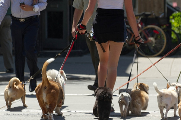 3 People Dog Walkers Avoid Like the Plague