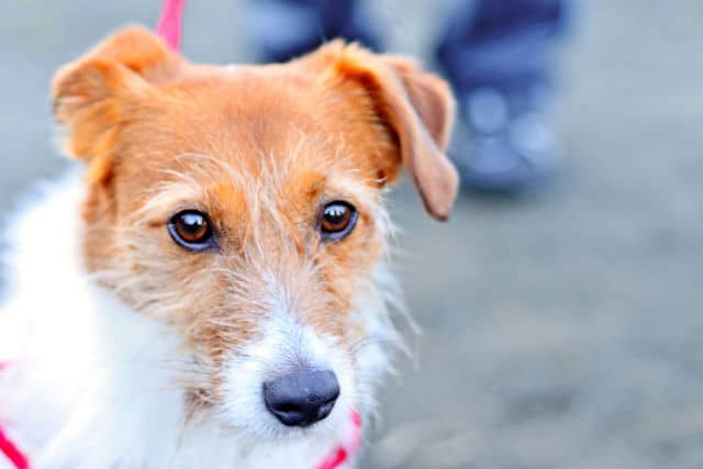 Simple and Free Way to Help Homeless Dogs on National Mutt Day