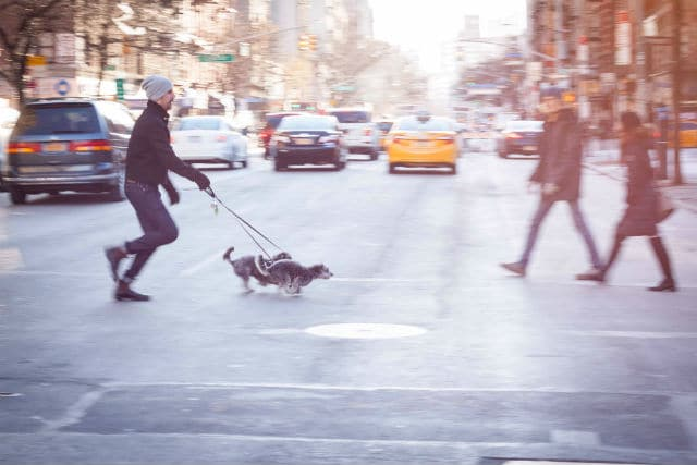 Variety Is the Spice of Life: How to Keep Your Dog Walks Interesting