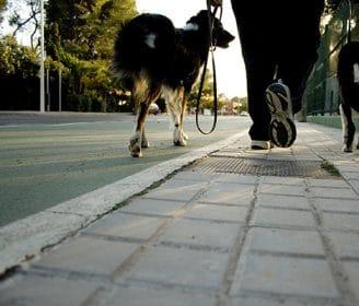 dogs walking on sidewalk