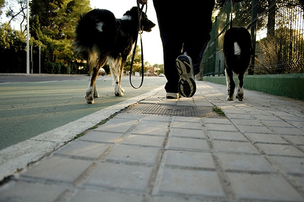 dogs walking on sidewalk