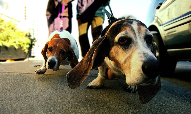 This Simple Trick Will Stop Your Dog From Pulling on Walks