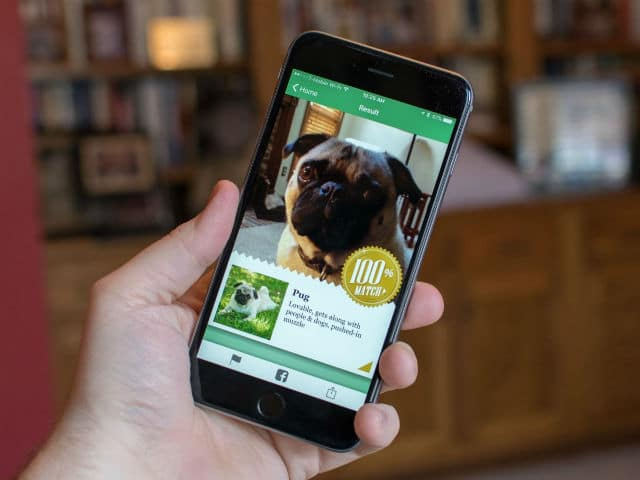 Microsoft's Fetch! App Can Identify Dog Breeds Based on Photos