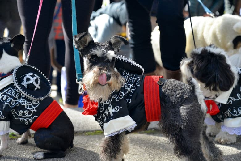 Get Ready: The Great PUPkin Dog Costume Contest Is Returning to Brooklyn