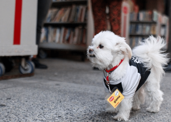 NYC's Beloved Strand Bookstore Offers the Perfect Gift for Dog Lovers