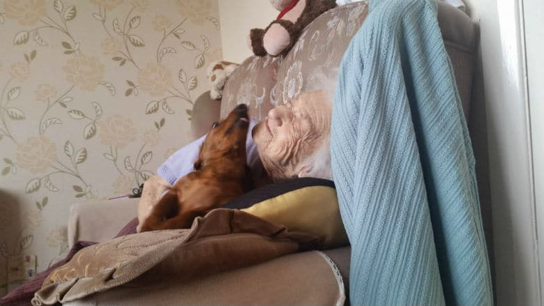 Grandmother with Alzheimers plays with dachshund puppy