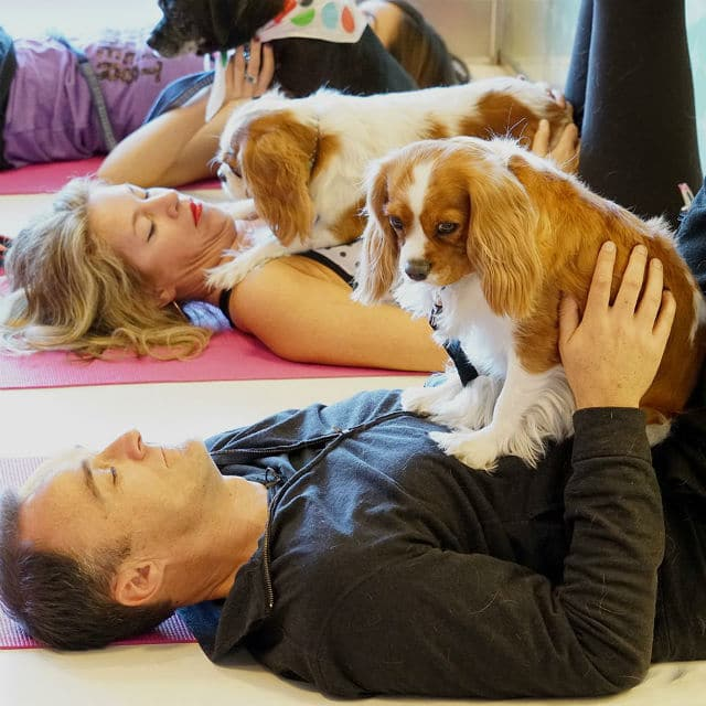 Healthy Spot's New Mind, Body & Bowl Series Hosts a Full Day of Fun For Pups and Parents in Santa Monica