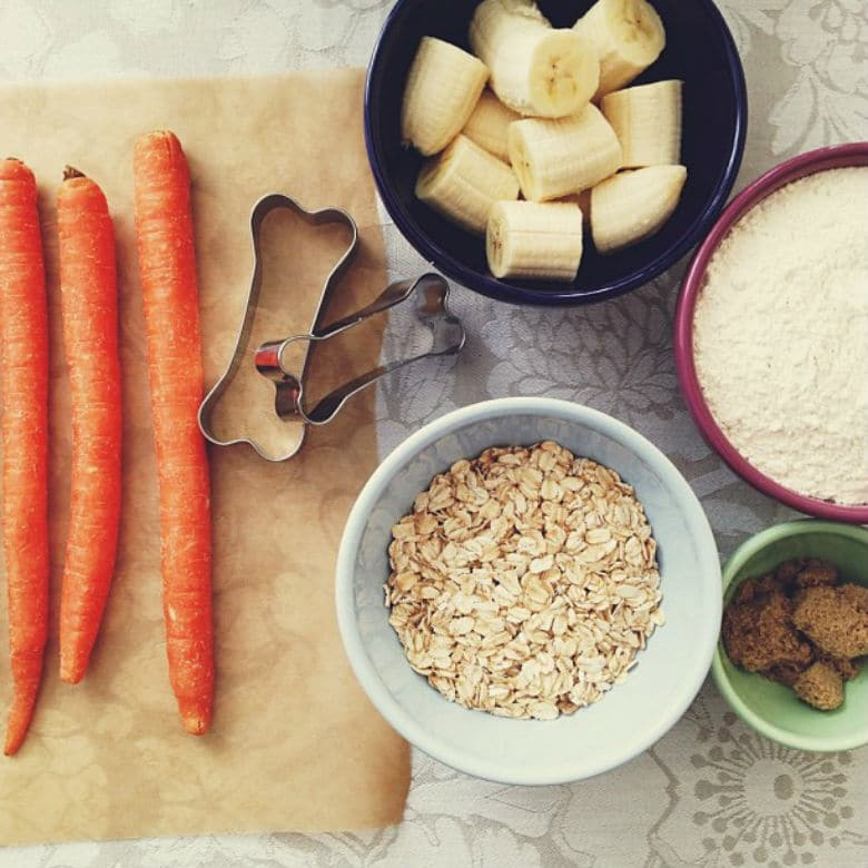 Beyond Raw Food: Other Beneficial Diet Options for Your Pup