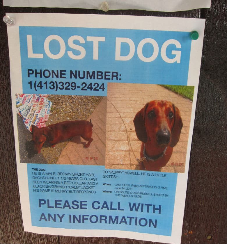 Preparing for the Worst: How to Prevent Your Dog From Getting Lost and Never Found