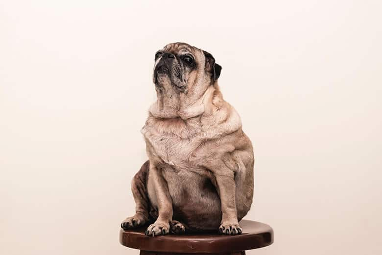 The Ultimate Weight Loss Guide for Your Dog
