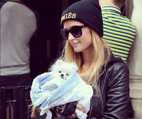 The Paris Hilton Syndrome: The Dangers of Carrying Your Little Dog Everywhere