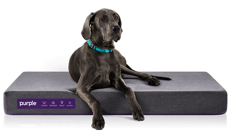 Sleep Tight: 6 of the Best Orthopedic Dog Beds on the Market