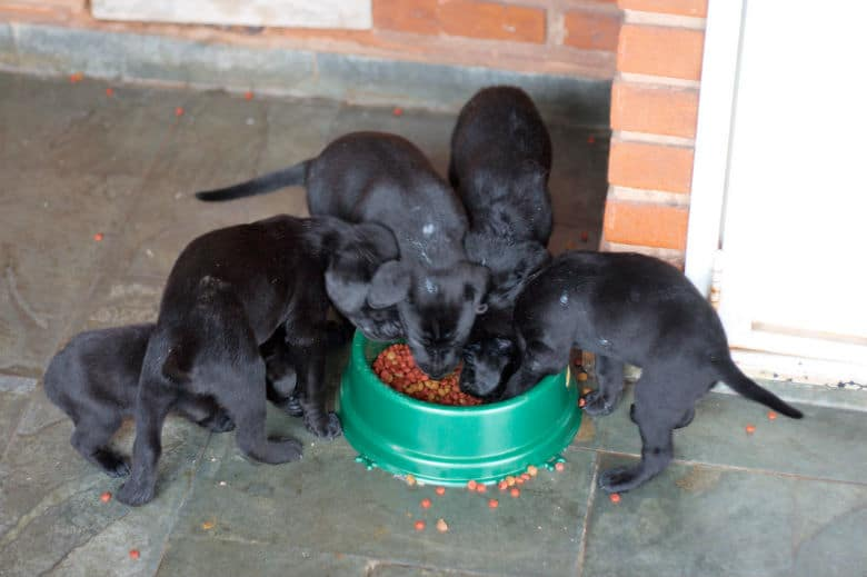 What Our Dogs Eats Could Be Having a Negative Impact on the Future of Canines