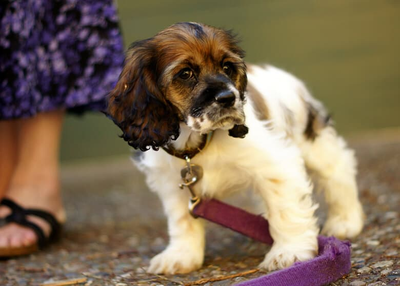 Everything You Need to Know About Introducing a Puppy Mill Dog Into Your Home