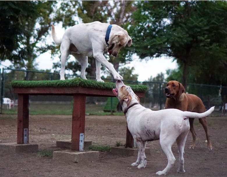 Los Angeles Dog Park Adds Three Agility Courses