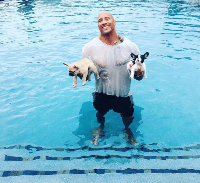 dwayne johnson saves puppies