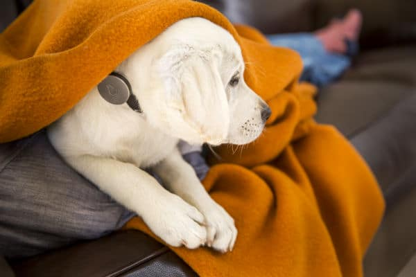 Fitbit for Dogs' Maker Whistle Beefs Up Its Arsenal With Tagg Pet