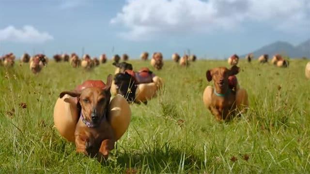 wiener dogs and heinz|