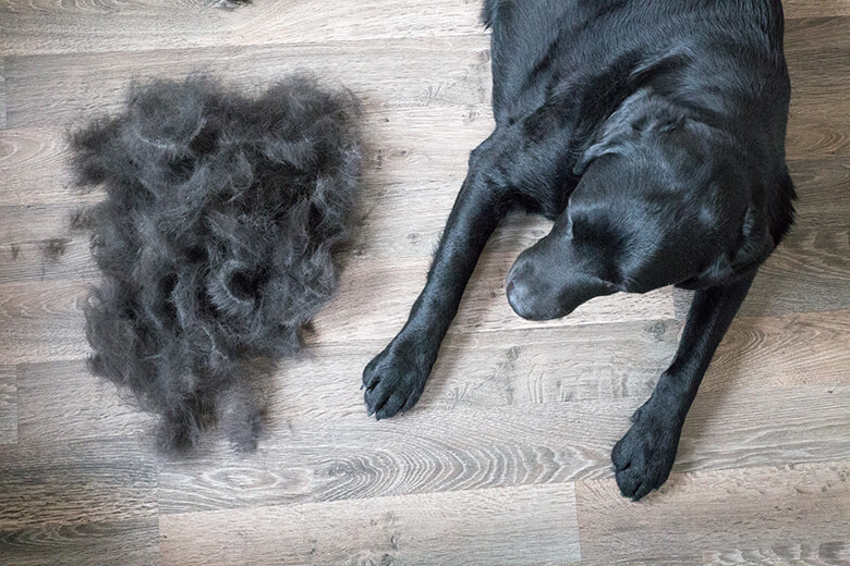 The Tricks Every Dog Owner Should Know on How to Reduce Shedding