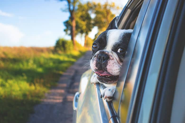 Here Are the Most Common Travel Injuries Your Dog May Encounter in the Car – and How Much They'll Cost You