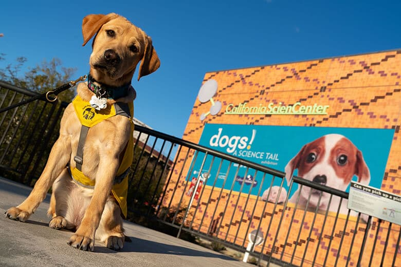 Special Exhibit Show the Bond We Share With Our Dogs