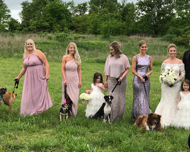 Bridesmaids Ditch Bouquets for Senior Dogs In Heartwarming Wedding Ceremony