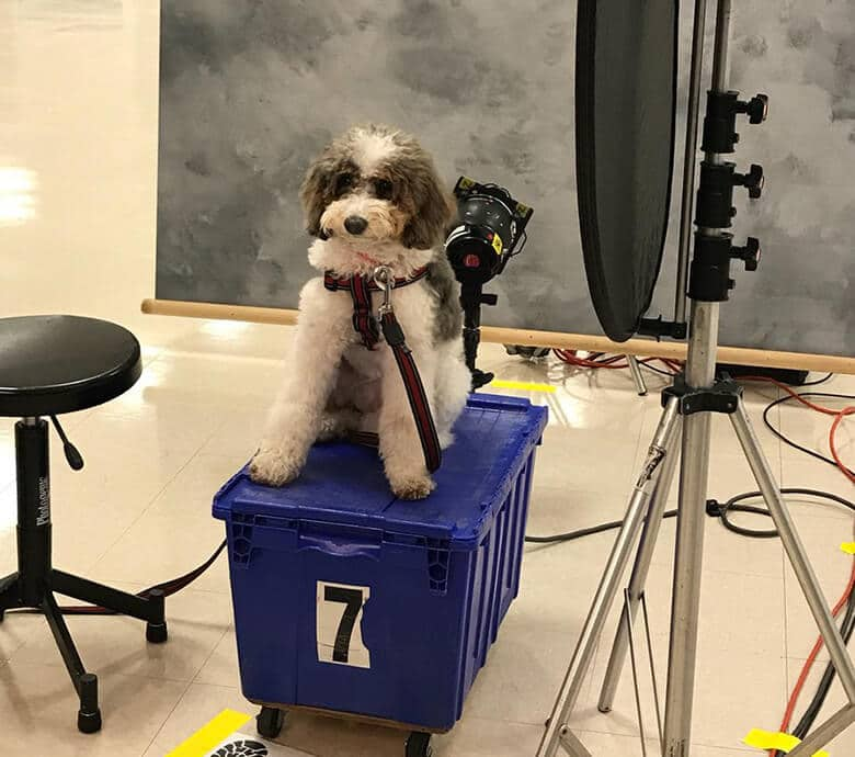 Colorado School Shooting Buzzfeed: A Yearbook Page Is Dedicated To The Therapy Dogs Who