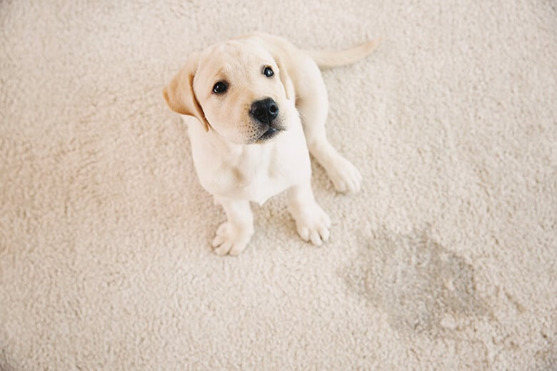 Spring Cleaning: 9 Non-Toxic Dog Stain and Odor Cleaners That Get the Job Done