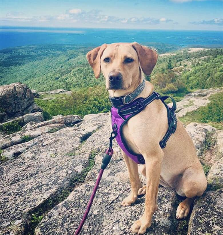 7 National Parks You Can Actually Bring Your Dog – This Dogs Life