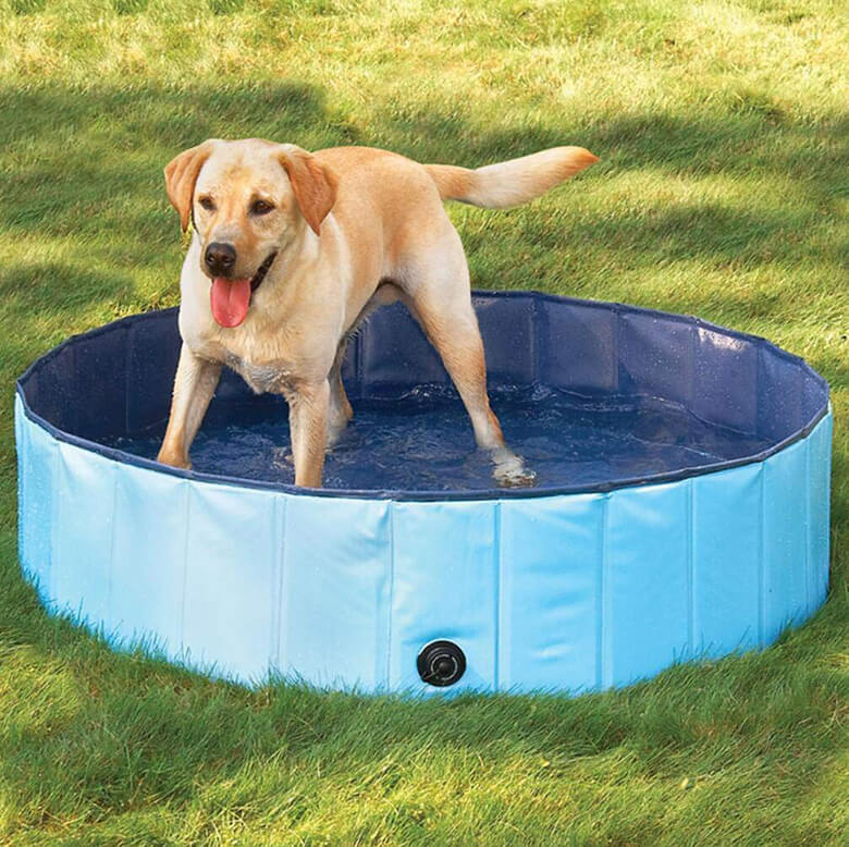 dog swimming pool