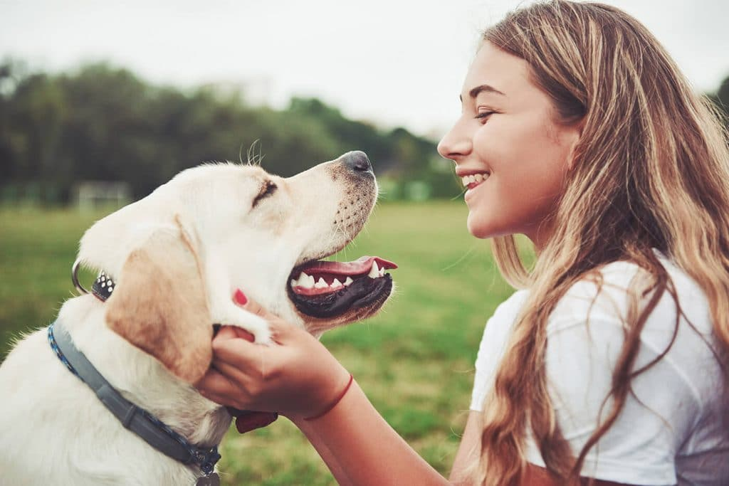 New Study Find Simply Petting Your Dog Reduces Stress – This Dogs Life