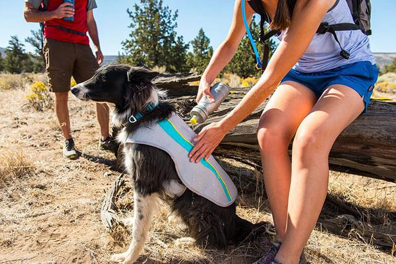It's Hot Outside! Here Are the Best Ways to Keep Your Dog Cool.
