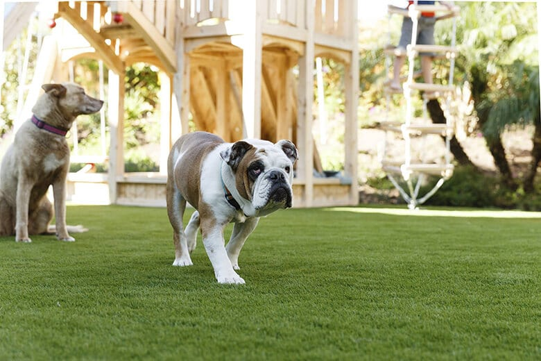 How to Create the Ultimate Backyard for Your Dog