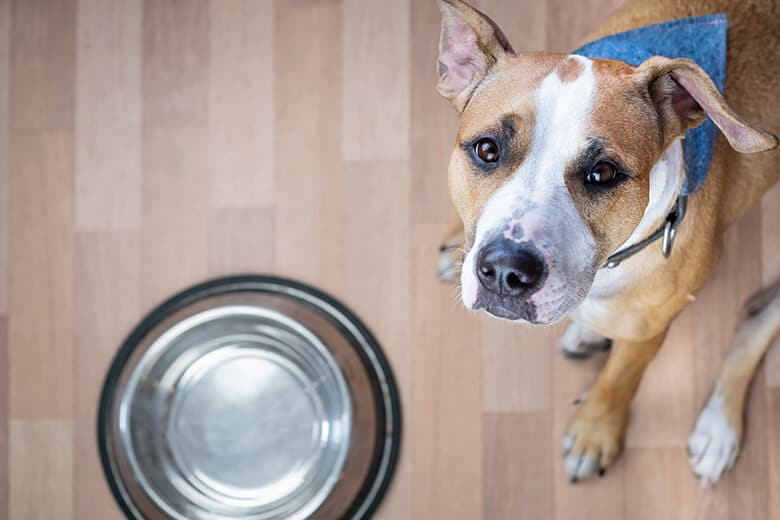 Do You Know About the Dangers Lurking In Your Dog's Water and Food Bowls?