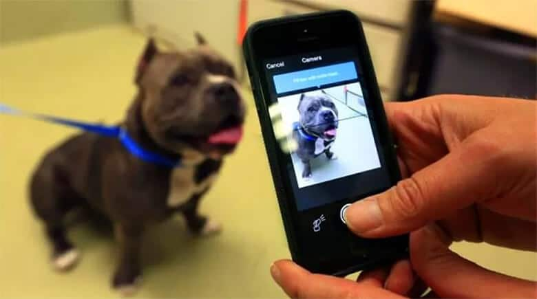 AI Company Launches Nose-Recognition Technology to Help Identify Dogs