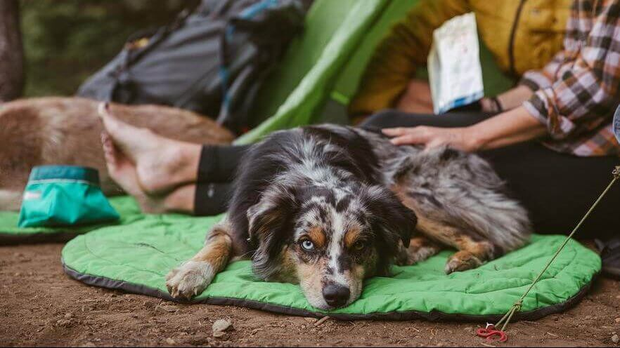 The Best Hiking and Camping Gear for Your Dog