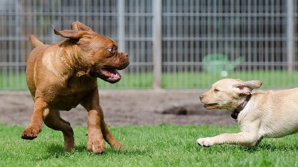 How to Find the Perfect Doggy Daycare for Your Pup